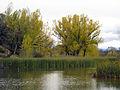 Cuenca del río Manzanares Monte del Pardo 15.jpg