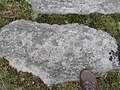 Cup marked rock - geograph.org.uk - 505460.jpg