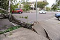 Cyclone Marcus in Darwin – Uprooted tree through concrete 01.jpg
