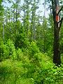 Cypress Swamp 4.jpg