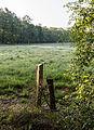 Dülmen, Naturschutzgebiet -Am Enteborn- -- 2014 -- 0197.jpg