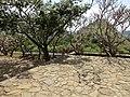 Dambulla, Sri Lanka - panoramio (138).jpg