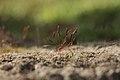 Dancing Moss (37486044).jpeg