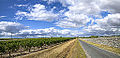 Dans le Médoc... Bordeaux Gironde Vin Vinoble Winery Wine (8036043381).jpg