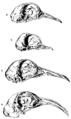 Darwin Domestic 124.png