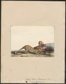 Dasyurus maculatus - 1700-1880 - Print - Iconographia Zoologica - Special Collections University of Amsterdam - UBA01 IZ20300220.tif