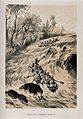 David Livingstone and his men going down the Zambezi rapids. Wellcome V0018853.jpg