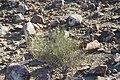De San Rafael a la Noria de las Animas ,RAMOS ARIZPE COAHILA - panoramio (41).jpg