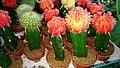 Decorative cactus.jpg