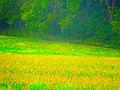 Deer in Field - panoramio.jpg