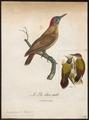 Dendropicus menstruus - 1796-1808 - Print - Iconographia Zoologica - Special Collections University of Amsterdam - UBA01 IZ18700189.tif