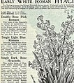 Descriptive catalogue of vegetable, flower, and farm seeds (18uu) (20862216842).jpg