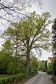 Detmold - 2014-04-12 - Hiddesen, Naturdenkmal Auf dem Brinke (3).jpg