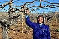 Die Mas vineyard, Wine Route, Upington, Northern Cape, South Africa (19919195434).jpg