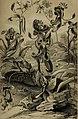 Die Pflanzendecke der Erde - populäre Darstellung der Pflanzengeographie für gebildete Naturfreunde (1859) (20752240849).jpg