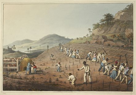 Slaves planting and tilling, 1823 Digging the Cane-holes - Ten Views in the Island of Antigua (1823), plate II - BL.jpg