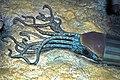 Diorama of a Devonian seafloor - cephalopod (45654169371).jpg