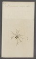 Diplodontus - Print - Iconographia Zoologica - Special Collections University of Amsterdam - UBAINV0274 070 05 0019.tif