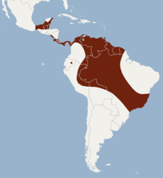 Distribution of Lampronycteris brachyotis.png