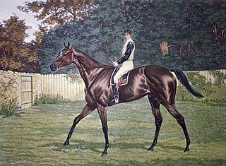 Donovan (horse) British Thoroughbred racehorse and sire
