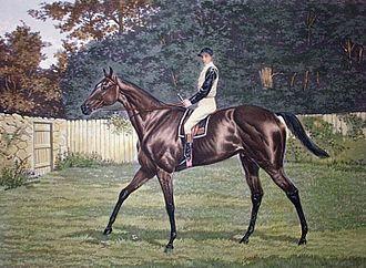 Donovan (horse) - Donovan, by Harrington Bird