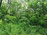 Dovhorakivskyi Botanical Reserve (2019.05.26) 09.jpg