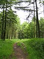 Downlands - Black Down - geograph.org.uk - 1363630.jpg