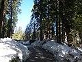 Driveway to Tenaya Lodge.jpg