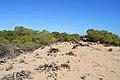 Dunes de Guardamar del Segura, duna.JPG