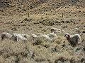 EVALUACION DE LA CARGA GANADERA EN PARCELAS INSTALADAS, PROYECTO CAMELSIMP - panoramio.jpg