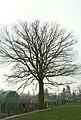 Eik als hoekboom te Zwalm - 372430 - onroerenderfgoed.jpg