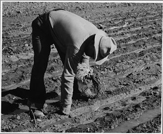 The formalist vs substantivist debate - Non-market subsistence farming in New Mexico: household provisioning or 'economic' activity?