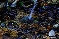 El agua, a su alrededor todo es vida, vivientes colores y fantasía - panoramio.jpg