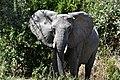 Elephant, Ruaha National Park (4) (28110993274).jpg