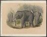 Elephas africanus - 1700-1880 - Print - Iconographia Zoologica - Special Collections University of Amsterdam - UBA01 IZ22000082.tif