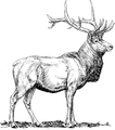 Elk 1 (PSF).png