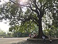Ellora caves 15-18 to right.jpg