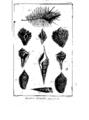 Encyclopedie volume 5-124.png