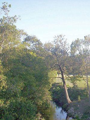 Enoggera Creek - Enoggera Creek at The Gap, 2010