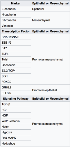Epithelial–mesenchymal transition - Key inducers of the epithelial to mesenchymal transition process.
