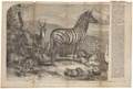 Equus zebra - 1861 - Print - Iconographia Zoologica - Special Collections University of Amsterdam - UBA01 IZ21700107.tif