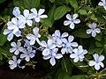 FLOWERS,HORSLEY HILLS AP - panoramio.jpg