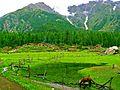 Fairy Meadows, in summers.jpg