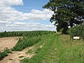 Farm track leading north at Broom Hill - geograph.org.uk - 1425487.jpg