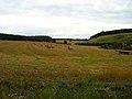 Farmland near Pond barn - geograph.org.uk - 225627.jpg