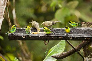 746 especies de aves en la provincia