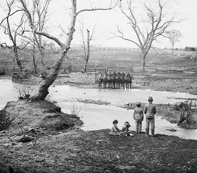 Photo of Federal Cavalry at Sudley Springs after the First Battle of Bull Run.