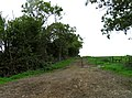 Field and track - geograph.org.uk - 999985.jpg