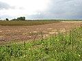Field beside bridleway - geograph.org.uk - 1388340.jpg