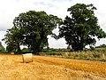 Field near Acton Turville - geograph.org.uk - 42896.jpg